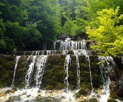 Arnavutlukta Ağaç kesimi yasaklandı