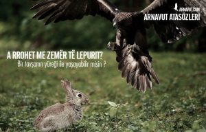 Bir tavşanın yüreği ile yaşayabilir misin ?